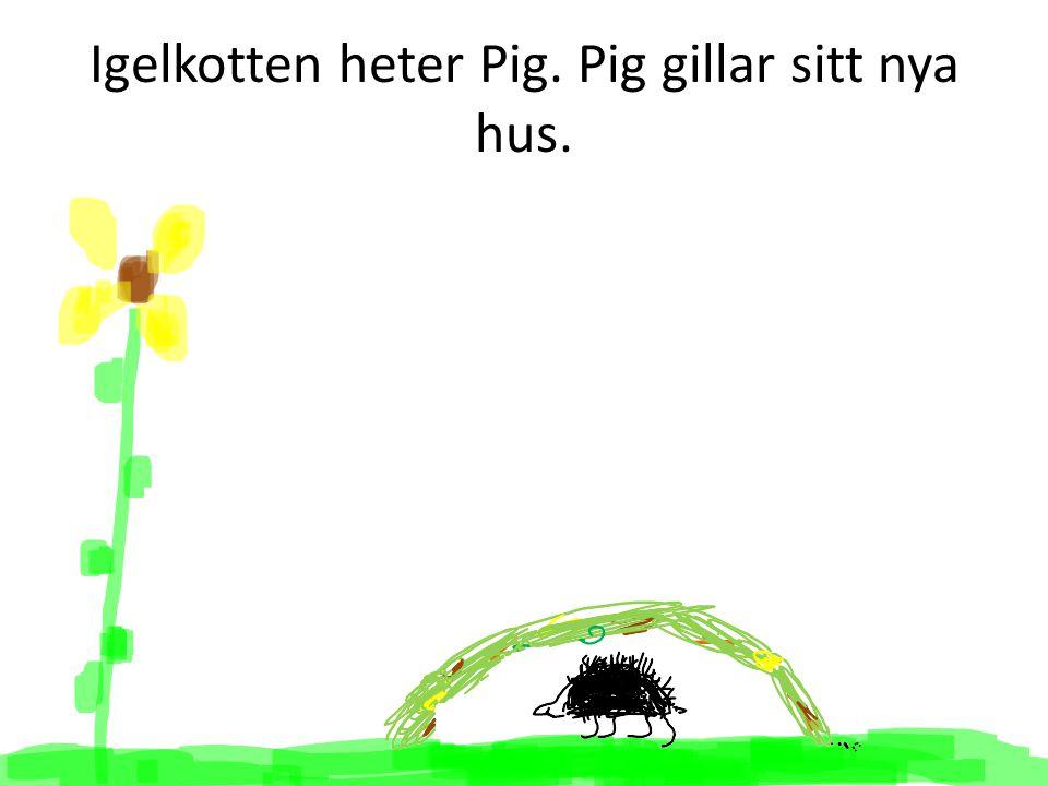 Igelkotten heter Pig. Pig gillar sitt nya hus.