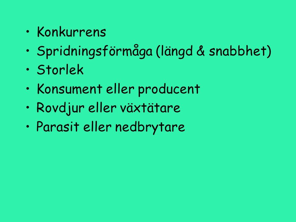 Konkurrens Spridningsförmåga (längd & snabbhet) Storlek. Konsument eller producent. Rovdjur eller växtätare.