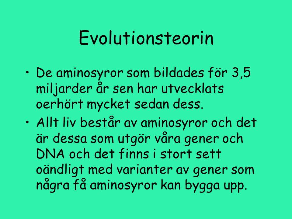 Evolutionsteorin De aminosyror som bildades för 3,5 miljarder år sen har utvecklats oerhört mycket sedan dess.