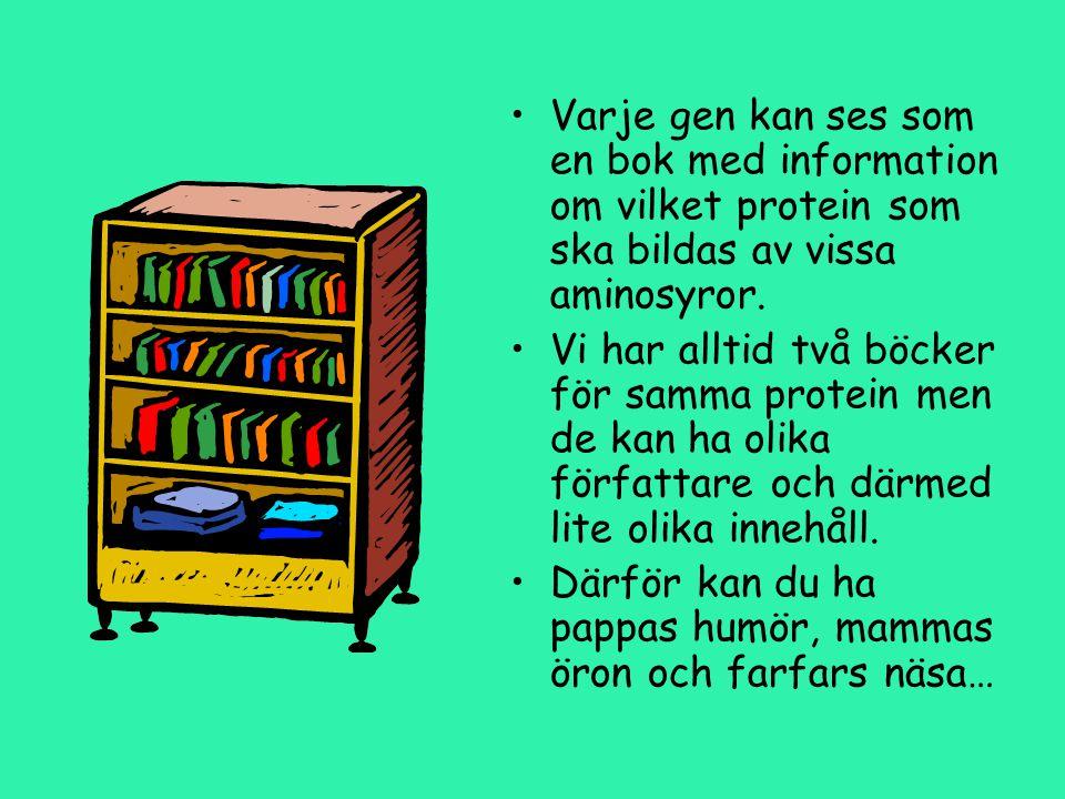 Varje gen kan ses som en bok med information om vilket protein som ska bildas av vissa aminosyror.