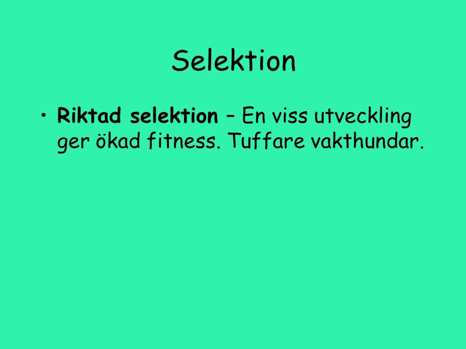 Selektion Riktad selektion – En viss utveckling ger ökad fitness. Tuffare vakthundar.