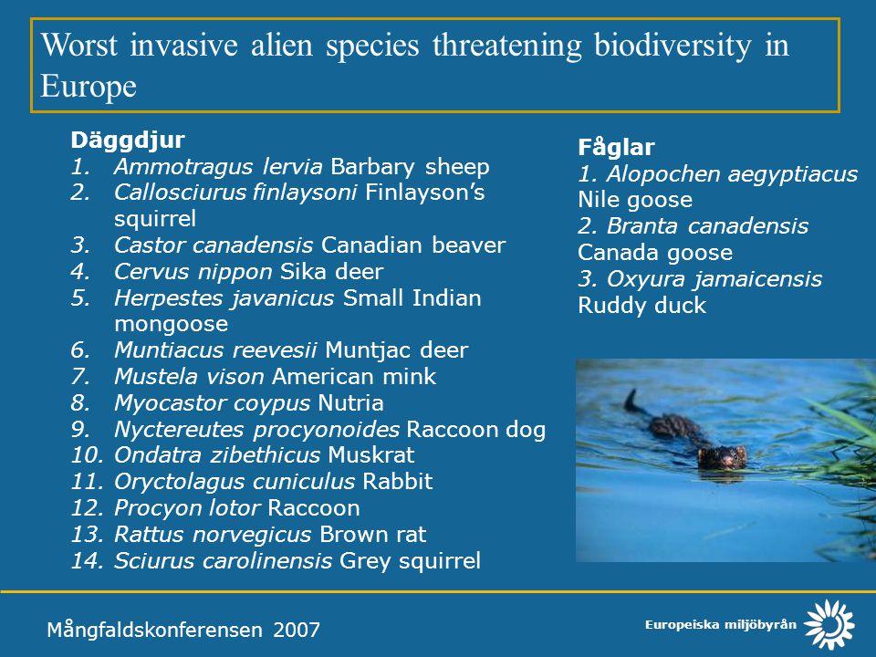 Worst invasive alien species threatening biodiversity in Europe