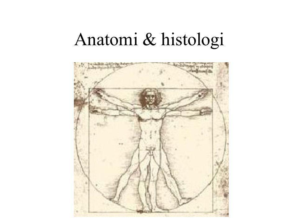 Anatomi & histologi