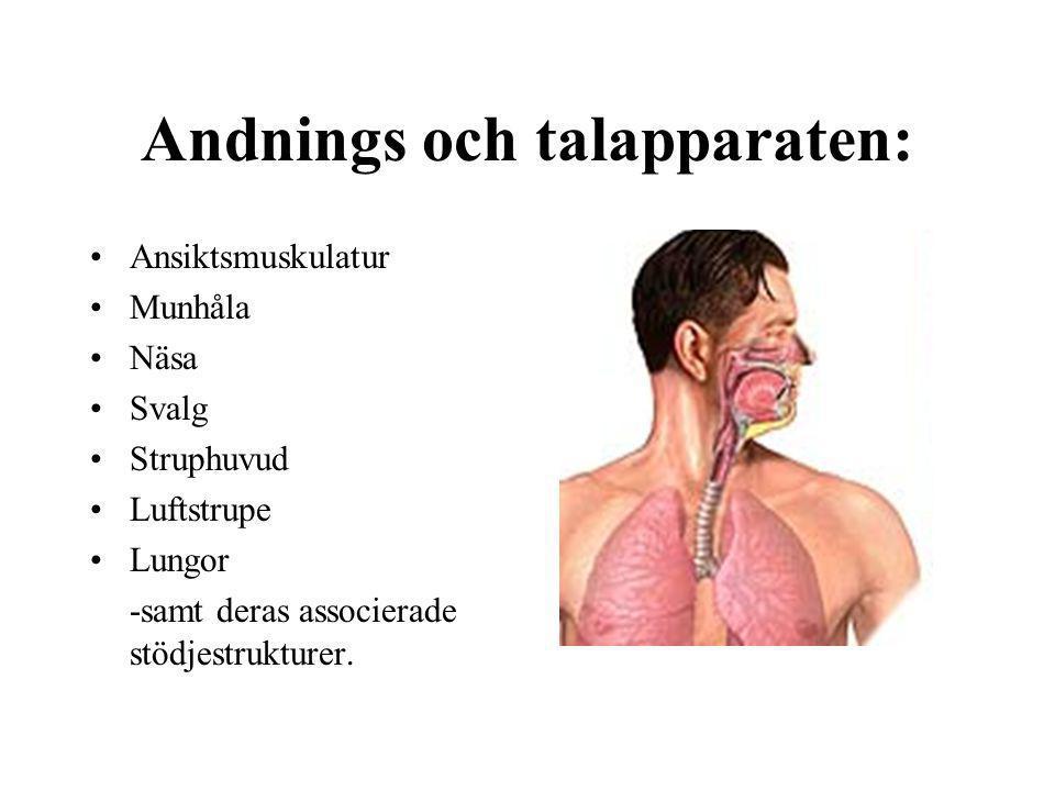 Andnings och talapparaten: