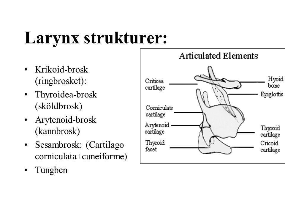 Larynx strukturer: Krikoid-brosk (ringbrosket):