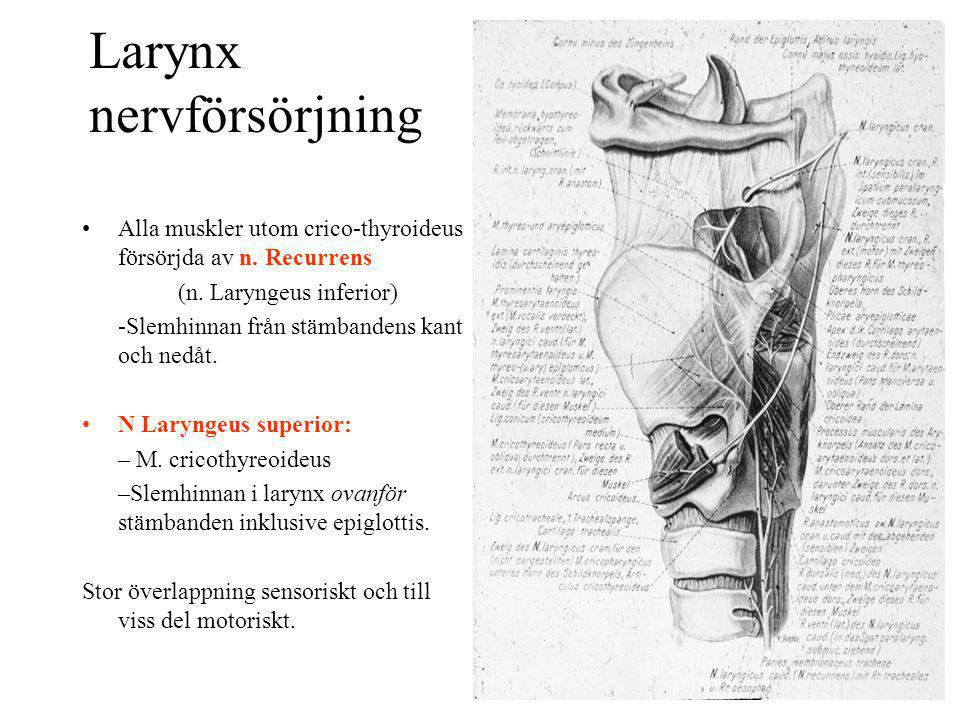 Larynx nervförsörjning