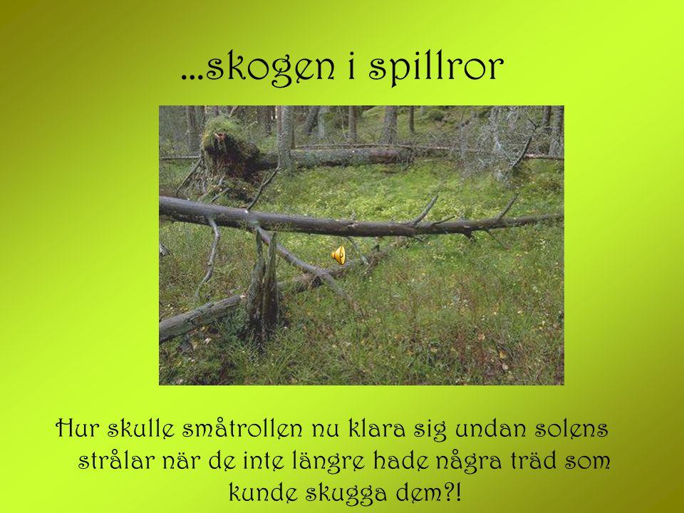 …skogen i spillror Hur skulle småtrollen nu klara sig undan solens strålar när de inte längre hade några träd som kunde skugga dem !