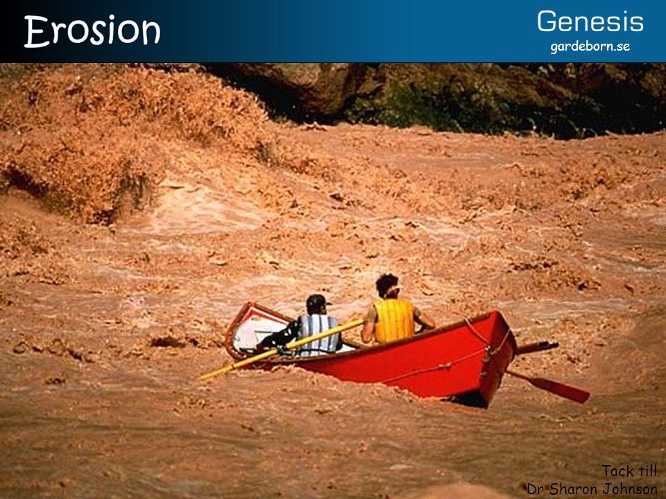 Erosion Rödbrunt vatten => Sediment => Fortfarande stor erosion i Coloradofloden (vid Crystal Rapids).