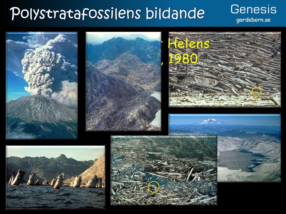 Polystratafossilens bildande