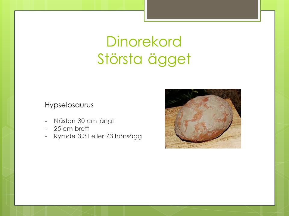 Dinorekord Största ägget