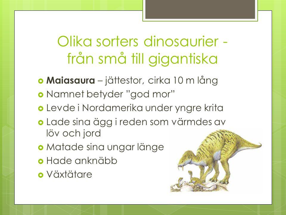 Olika sorters dinosaurier - från små till gigantiska