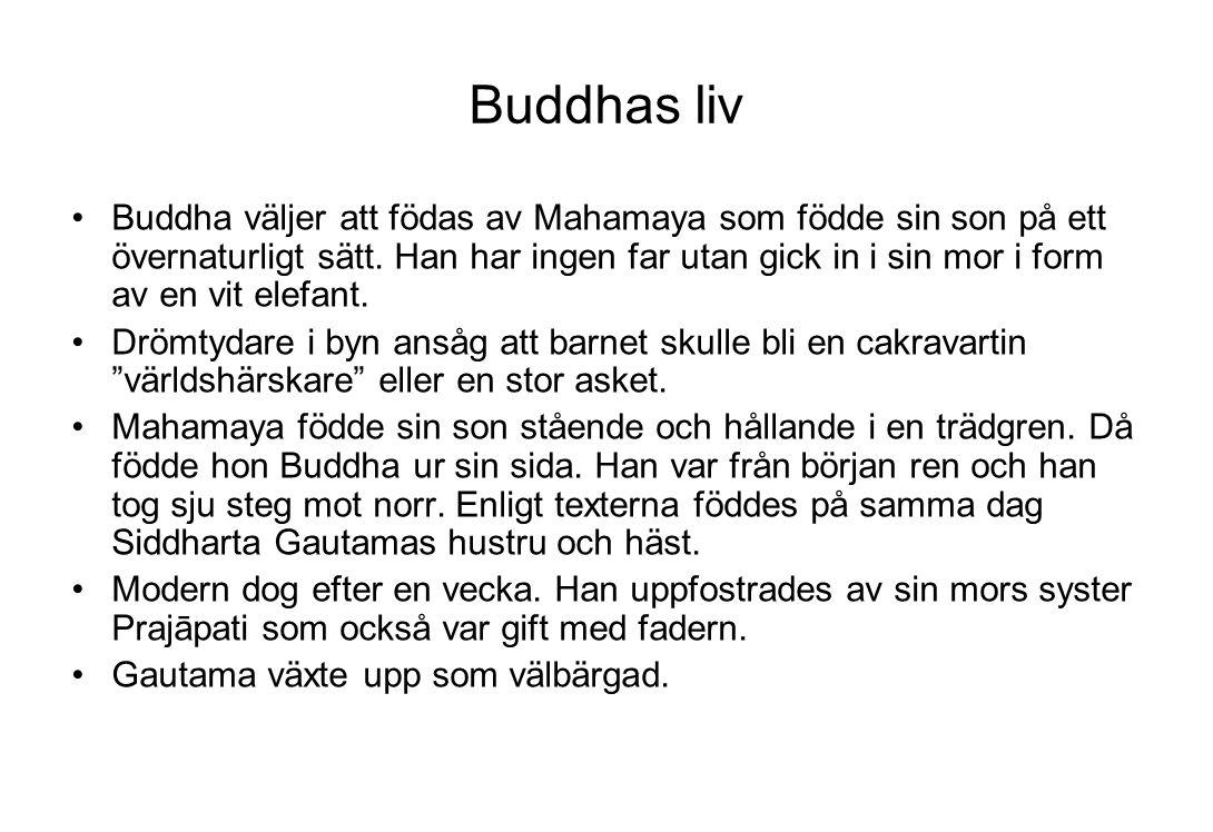 Buddhas liv