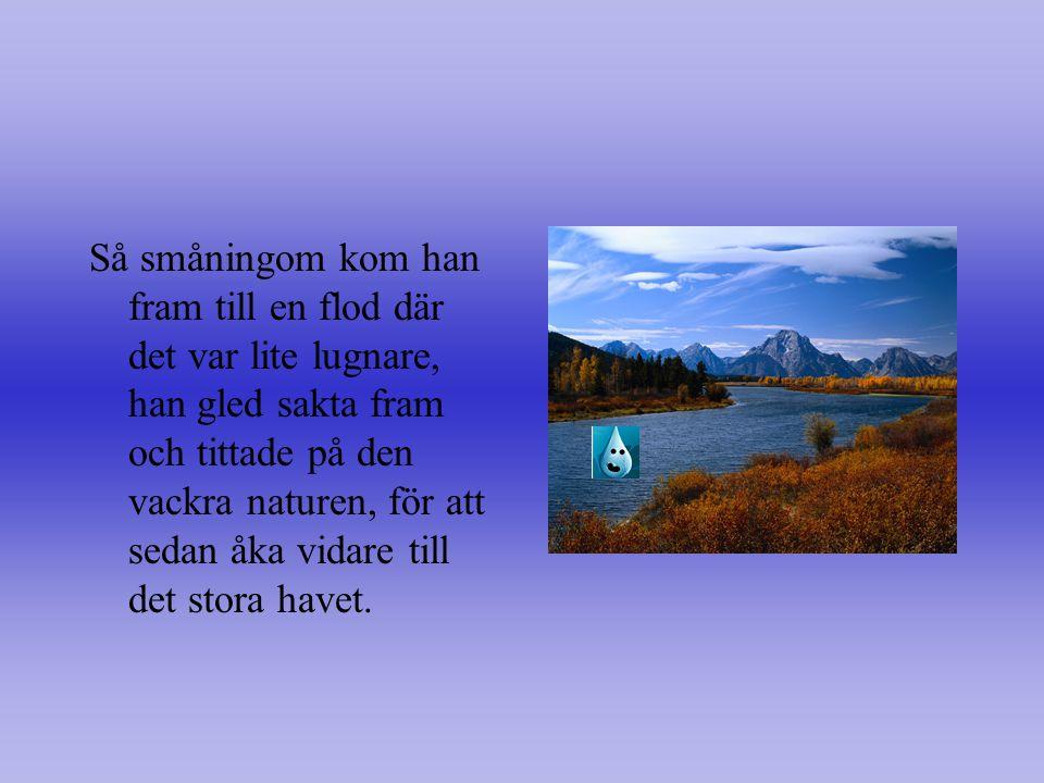 Så småningom kom han fram till en flod där det var lite lugnare, han gled sakta fram och tittade på den vackra naturen, för att sedan åka vidare till det stora havet.