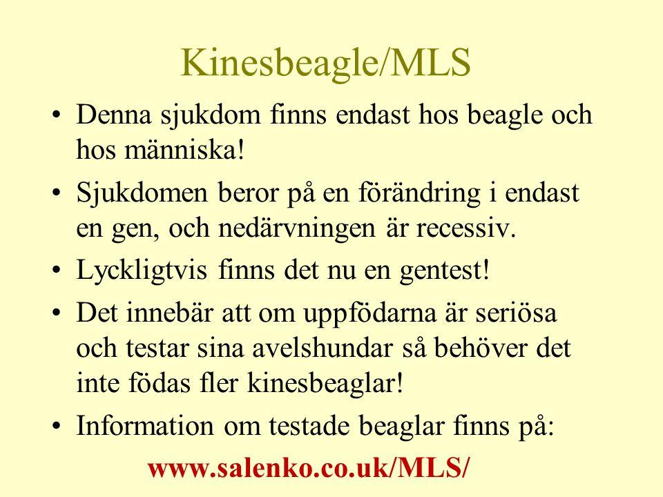 Kinesbeagle/MLS Denna sjukdom finns endast hos beagle och hos människa!