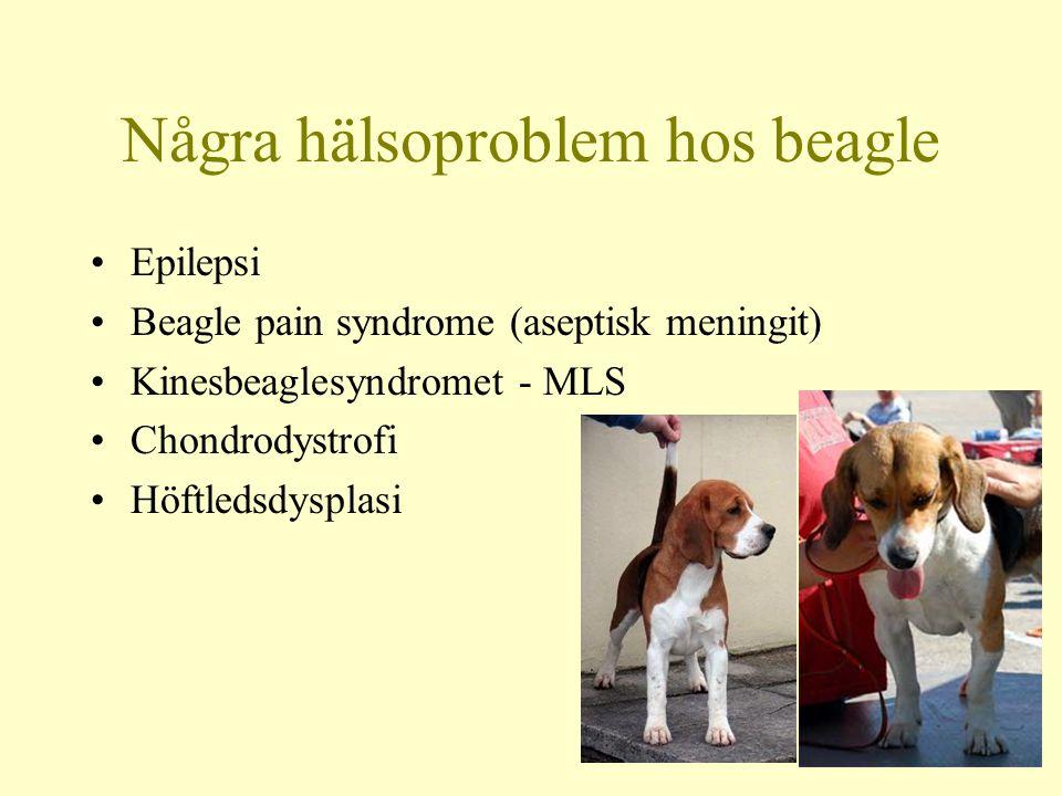 Några hälsoproblem hos beagle