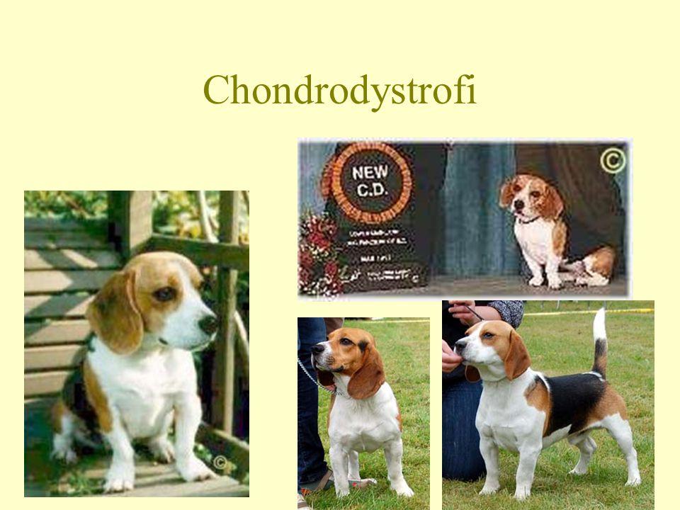 Chondrodystrofi