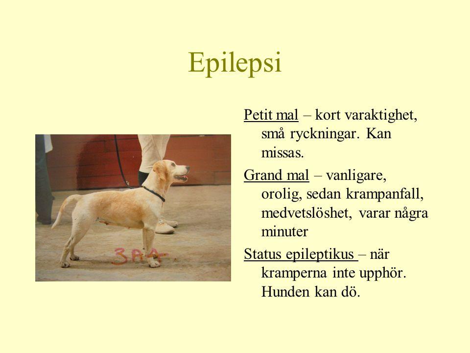 Epilepsi Petit mal – kort varaktighet, små ryckningar. Kan missas.