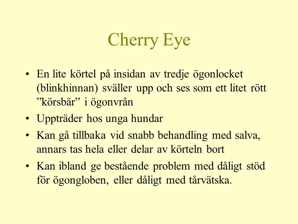 Cherry Eye En lite körtel på insidan av tredje ögonlocket (blinkhinnan) sväller upp och ses som ett litet rött körsbär i ögonvrån.