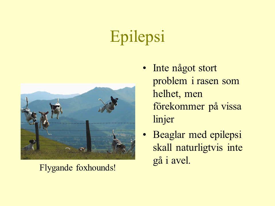 Epilepsi Inte något stort problem i rasen som helhet, men förekommer på vissa linjer. Beaglar med epilepsi skall naturligtvis inte gå i avel.