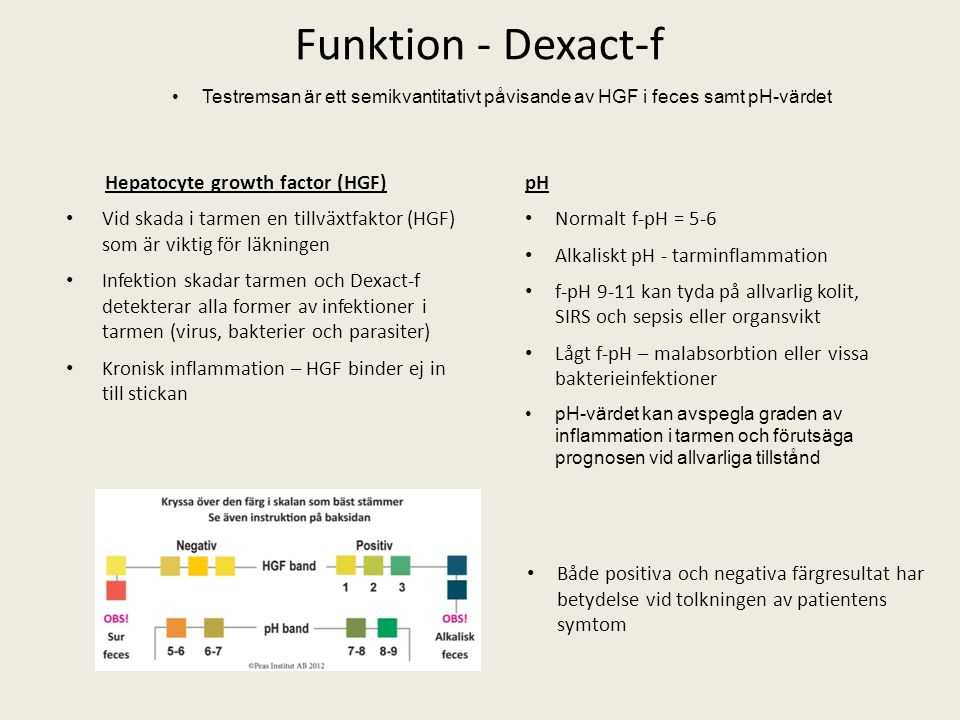Funktion - Dexact-f Hepatocyte growth factor (HGF)