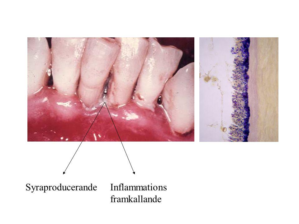 Syraproducerande Inflammations framkallande
