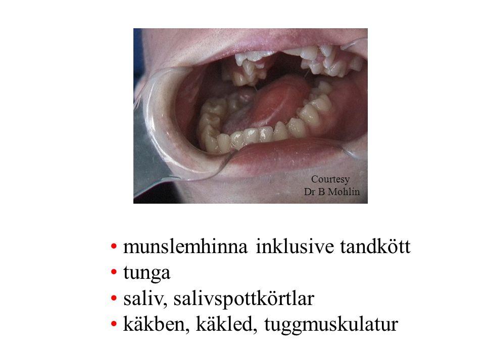 munslemhinna inklusive tandkött tunga saliv, salivspottkörtlar