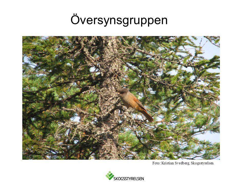 Översynsgruppen Foto: Kristian Svedberg, Skogsstyrelsen