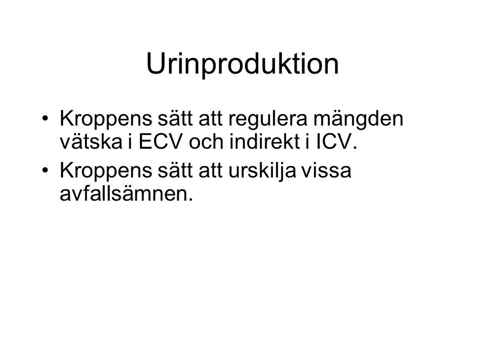 Gemütlich Urinproduktion Fotos - Menschliche Anatomie Bilder ...