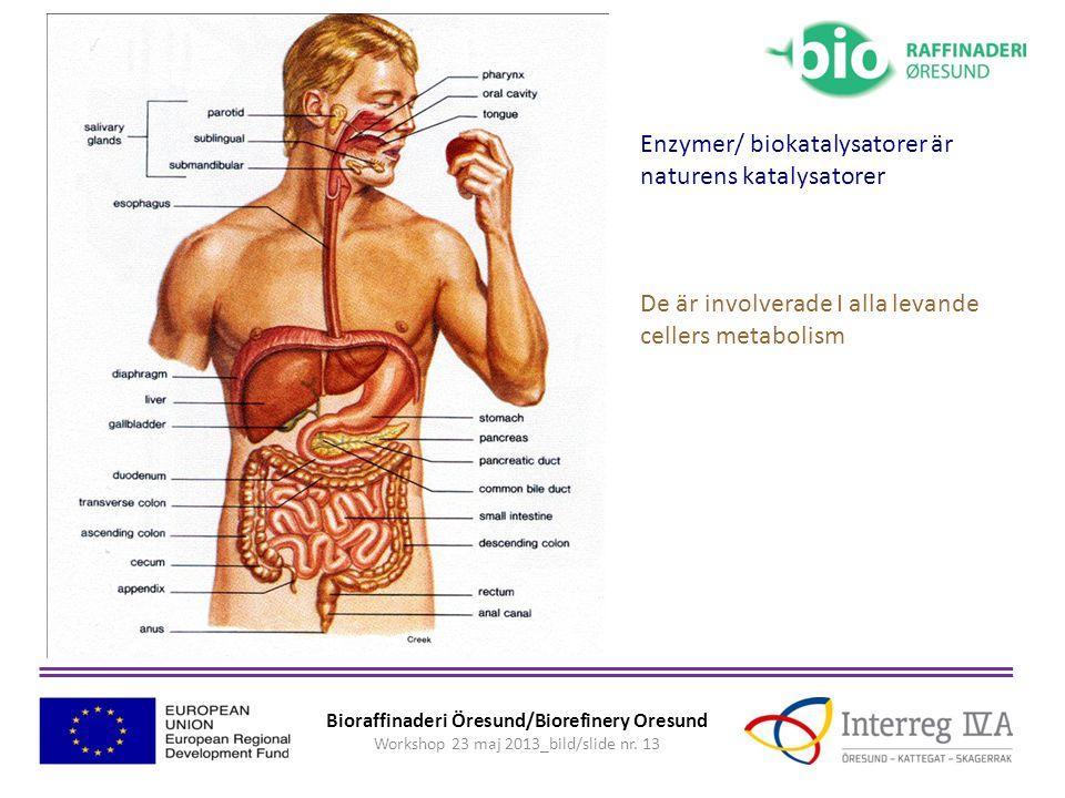 Enzymer/ biokatalysatorer är naturens katalysatorer