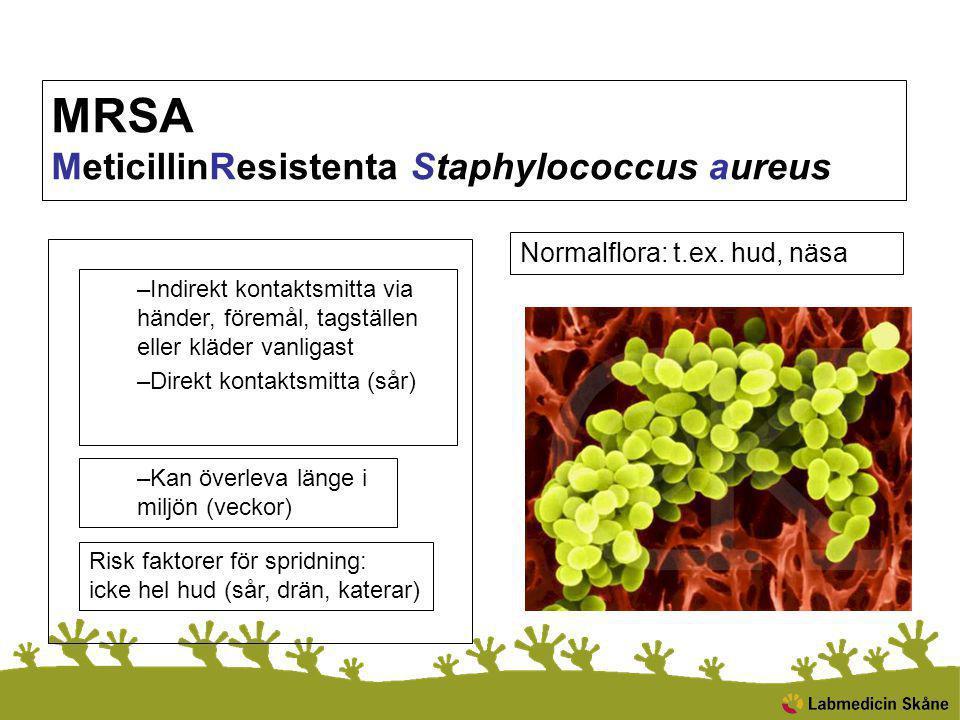 MRSA MeticillinResistenta Staphylococcus aureus