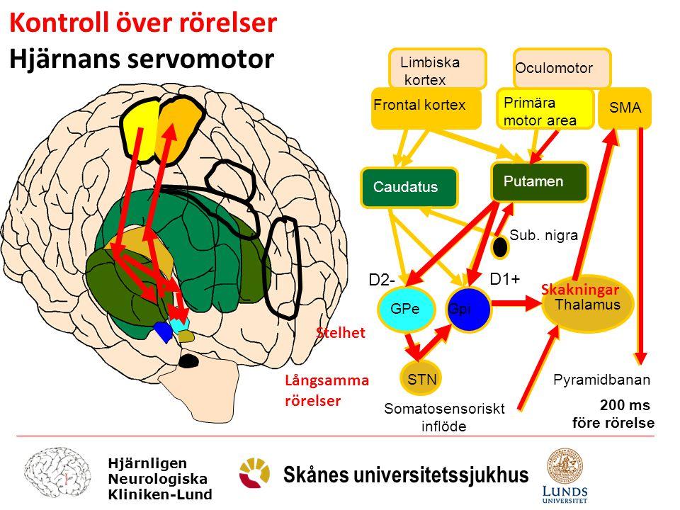 Kontroll över rörelser Hjärnans servomotor