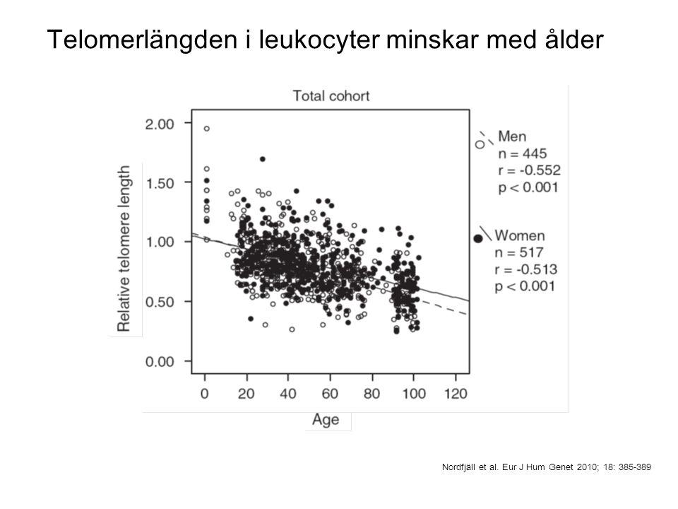 Telomerlängden i leukocyter minskar med ålder