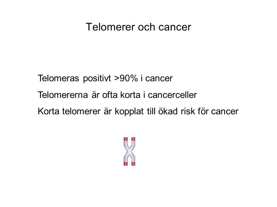 Telomerer och cancer Telomeras positivt >90% i cancer