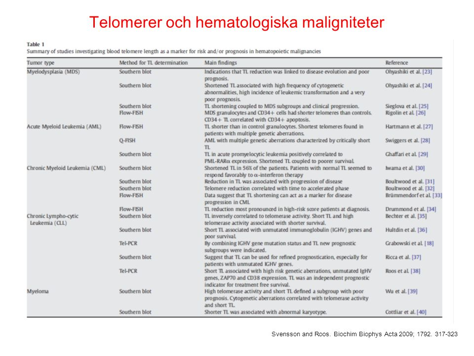 Telomerer och hematologiska maligniteter