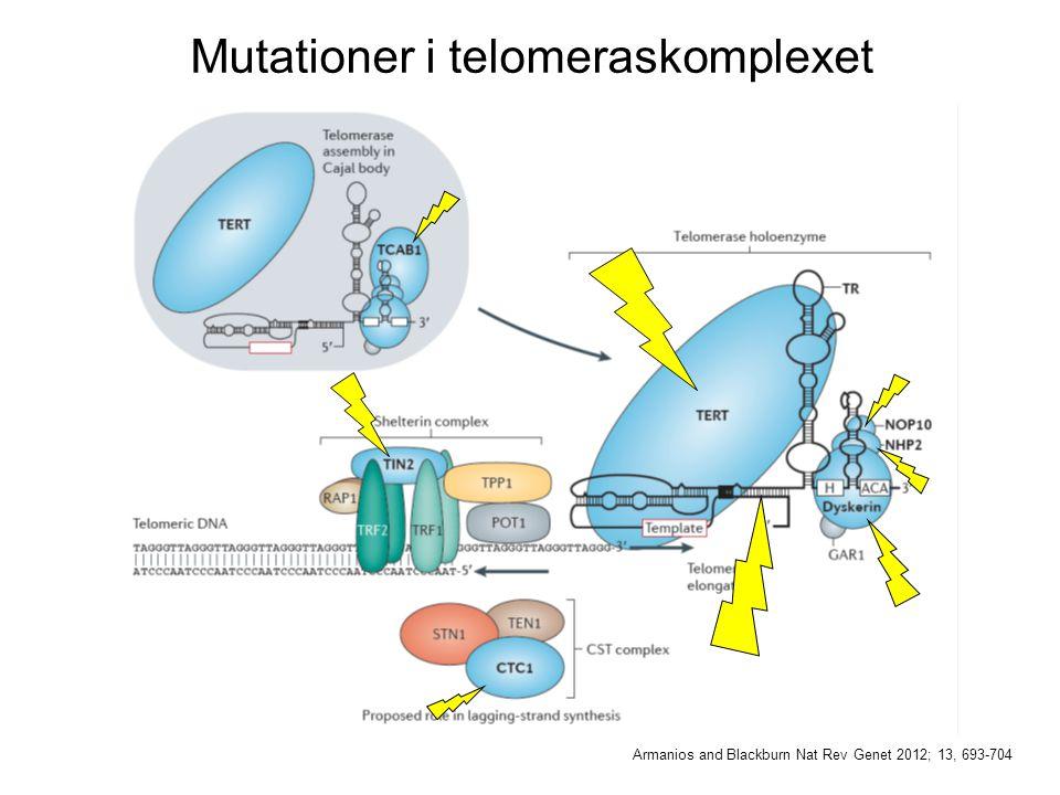 Mutationer i telomeraskomplexet