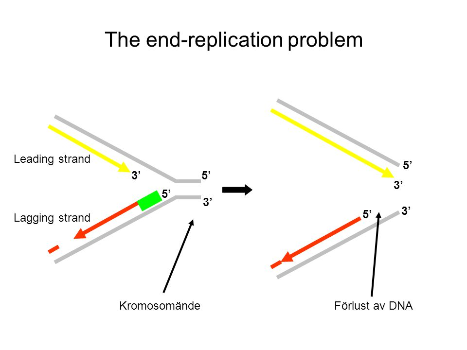 The end-replication problem