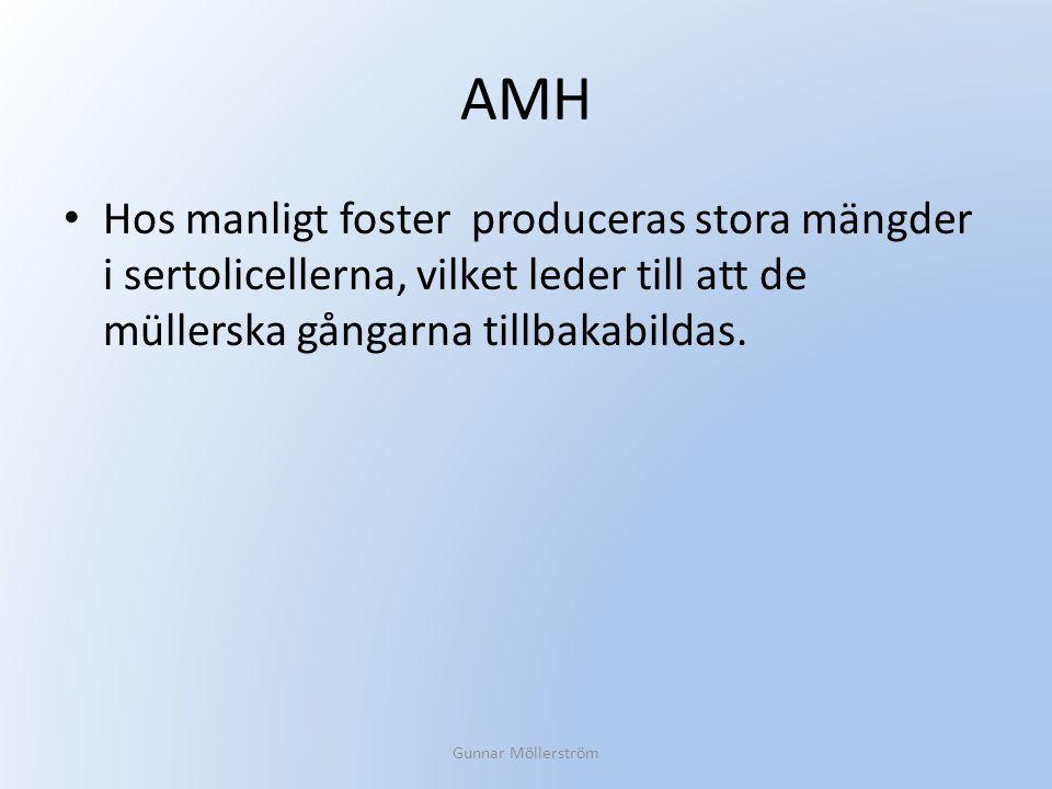 AMH Hos manligt foster produceras stora mängder i sertolicellerna, vilket leder till att de müllerska gångarna tillbakabildas.
