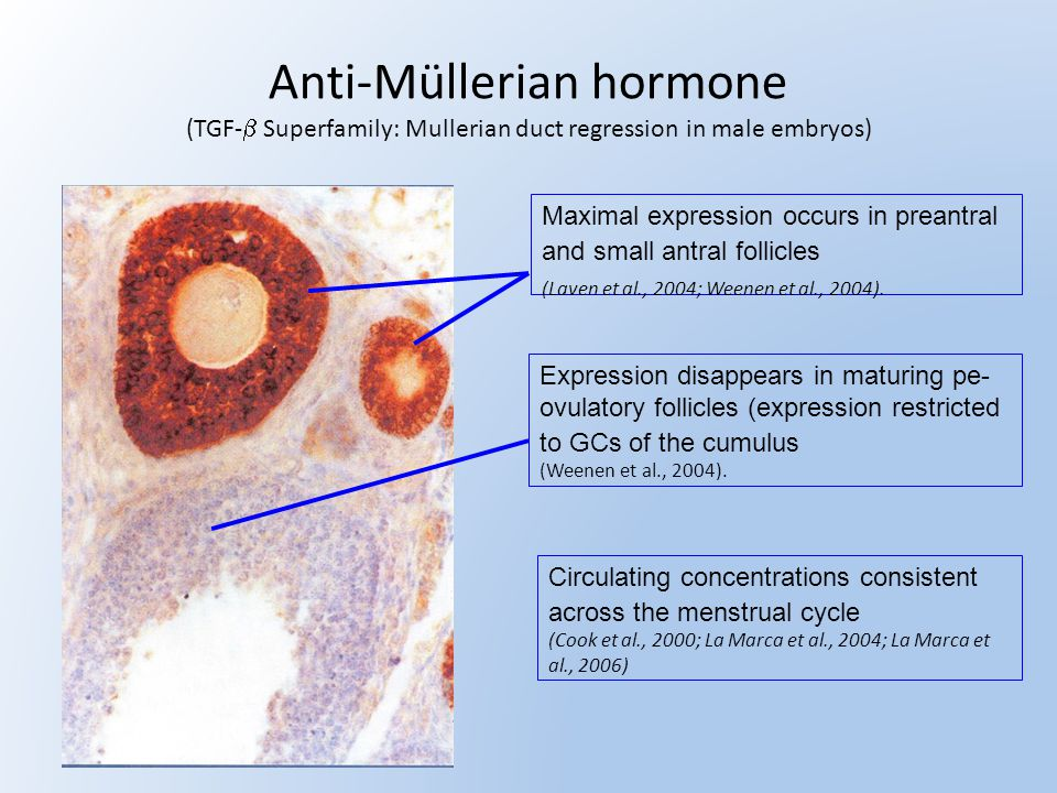 Anti-Müllerian hormone (TGF-b Superfamily: Mullerian duct regression in male embryos)