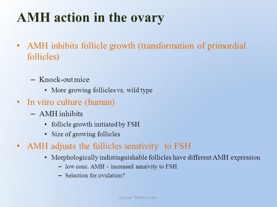 AMH action in the ovary AMH inhibits follicle growth (transformation of primordial follicles) Knock-out mice.