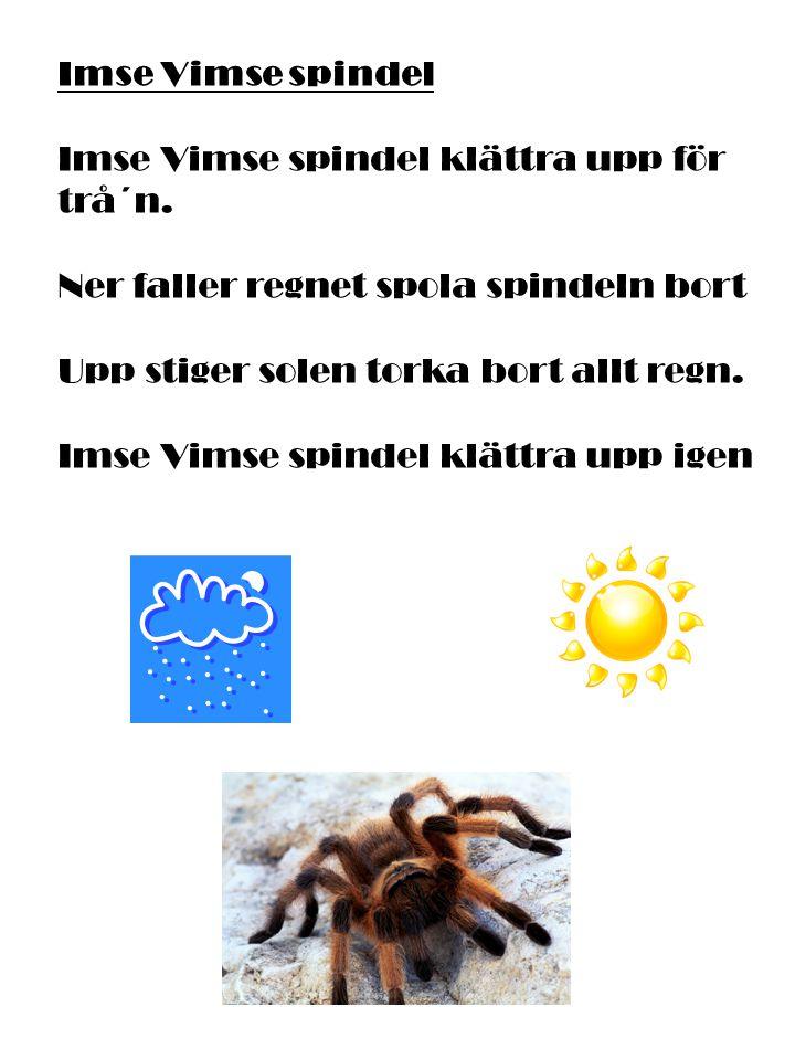 Imse Vimse spindel Imse Vimse spindel klättra upp för trå´n. Ner faller regnet spola spindeln bort.