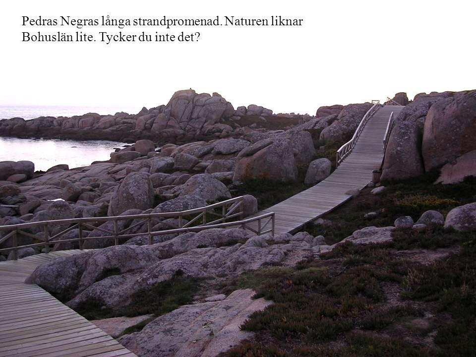 Pedras Negras långa strandpromenad. Naturen liknar Bohuslän lite