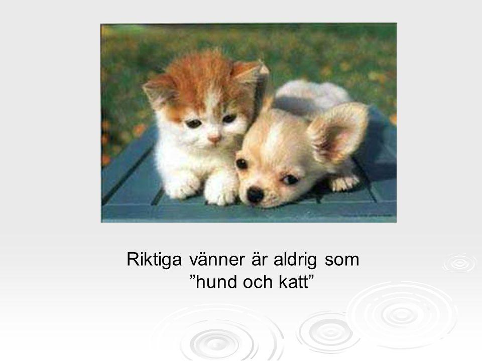 Riktiga vänner är aldrig som hund och katt