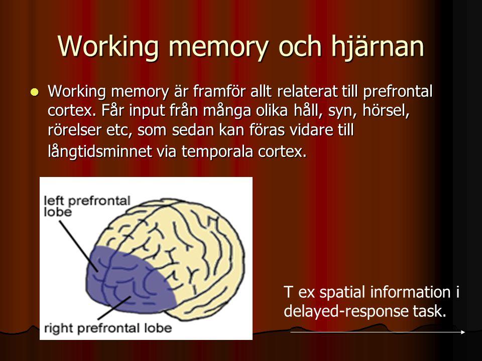 Working memory och hjärnan