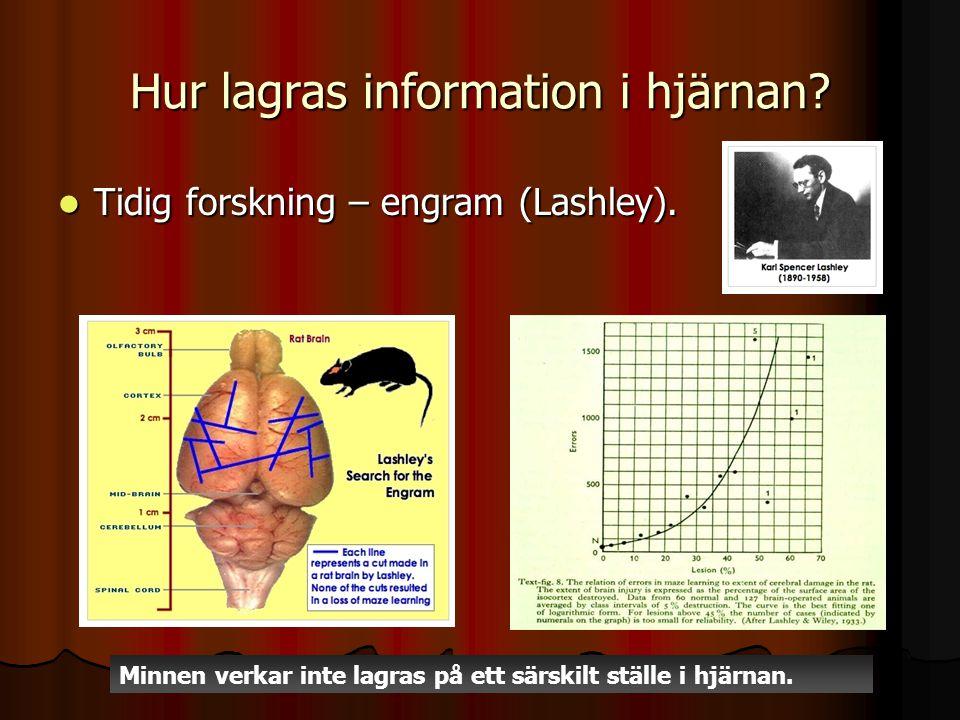 Hur lagras information i hjärnan