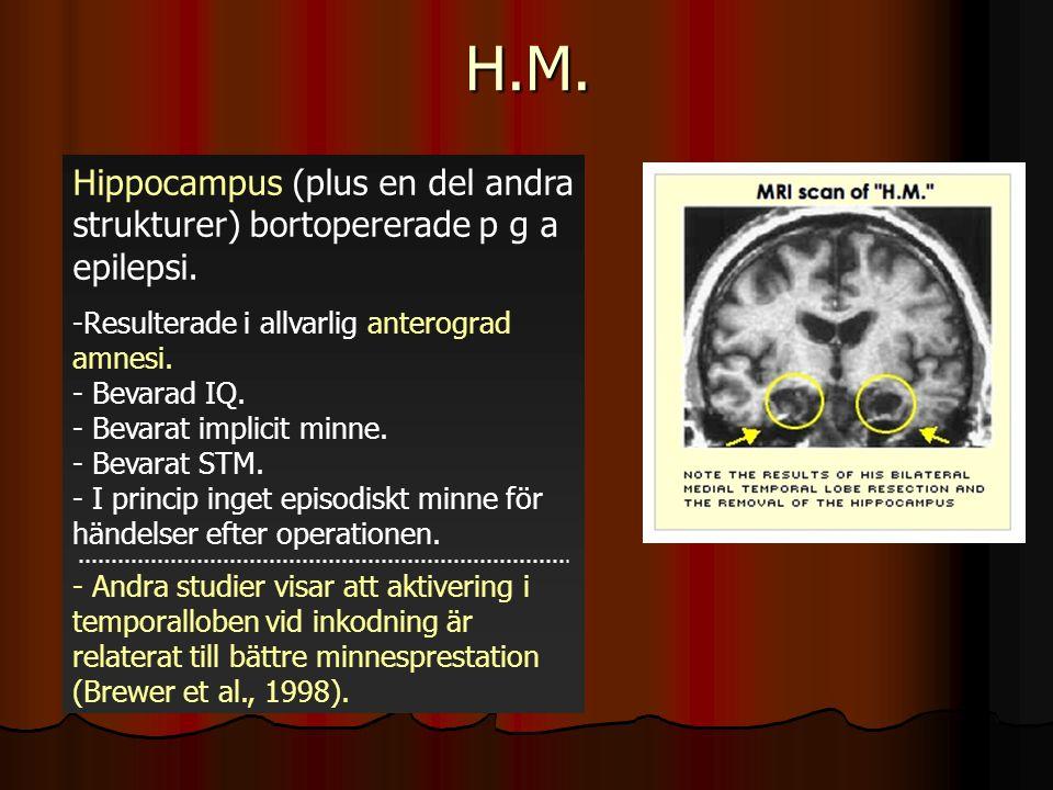 H.M. Hippocampus (plus en del andra strukturer) bortopererade p g a epilepsi.
