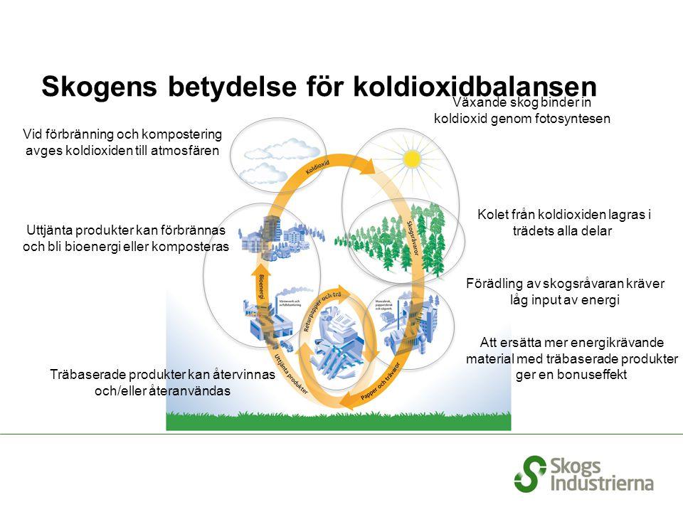 Skogens betydelse för koldioxidbalansen