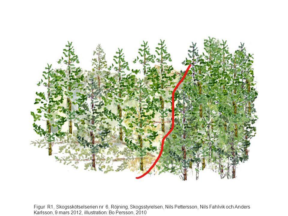 Figur R1, Skogsskötselserien nr 6, Röjning, Skogsstyrelsen, Nils Pettersson, Nils Fahlvik och Anders Karlsson, 9 mars 2012, illustration: Bo Persson, 2010