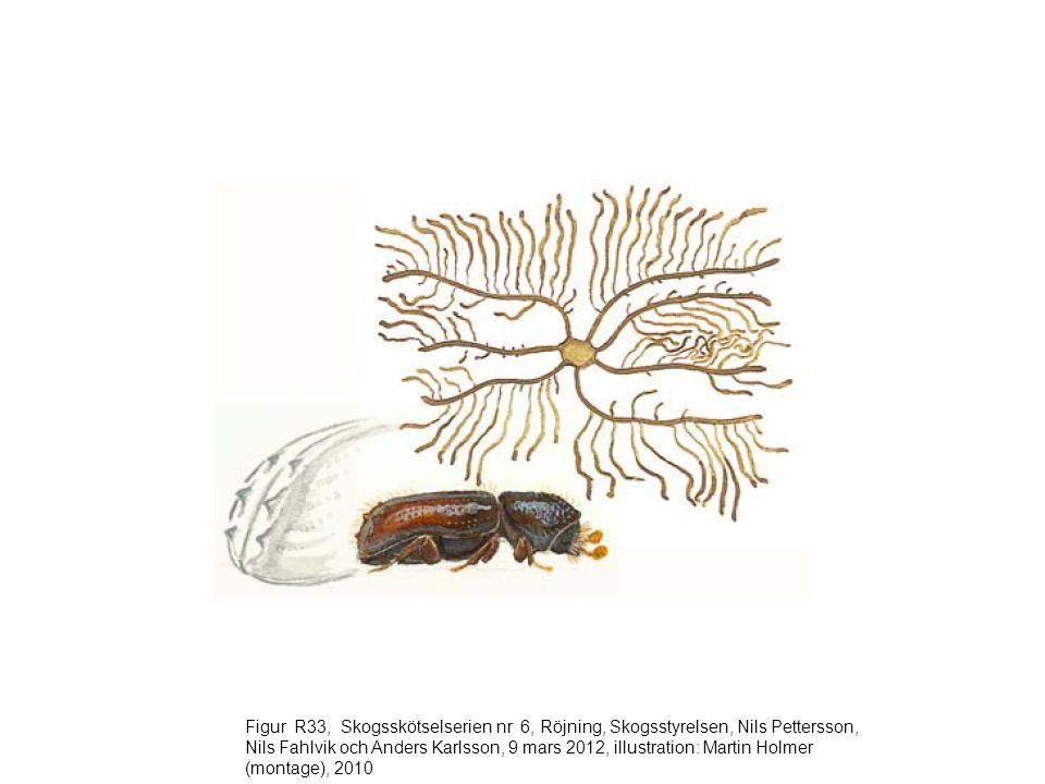 Figur R33, Skogsskötselserien nr 6, Röjning, Skogsstyrelsen, Nils Pettersson, Nils Fahlvik och Anders Karlsson, 9 mars 2012, illustration: Martin Holmer (montage), 2010