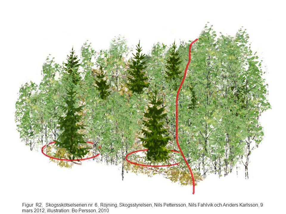 Figur R2, Skogsskötselserien nr 6, Röjning, Skogsstyrelsen, Nils Pettersson, Nils Fahlvik och Anders Karlsson, 9 mars 2012, illustration: Bo Persson, 2010