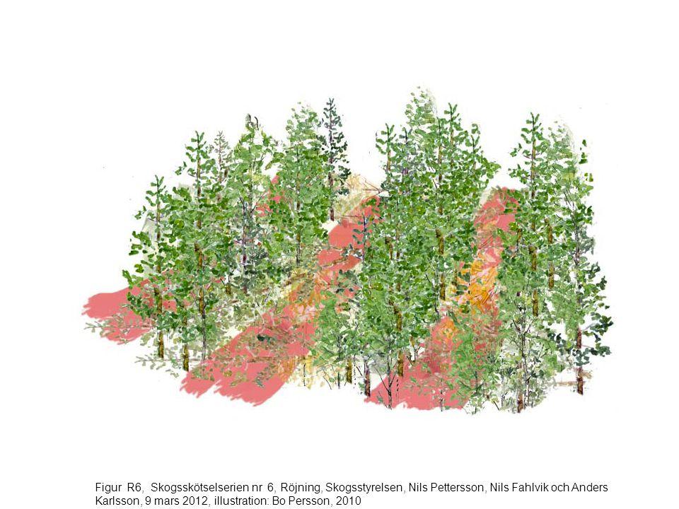 Figur R6, Skogsskötselserien nr 6, Röjning, Skogsstyrelsen, Nils Pettersson, Nils Fahlvik och Anders Karlsson, 9 mars 2012, illustration: Bo Persson, 2010